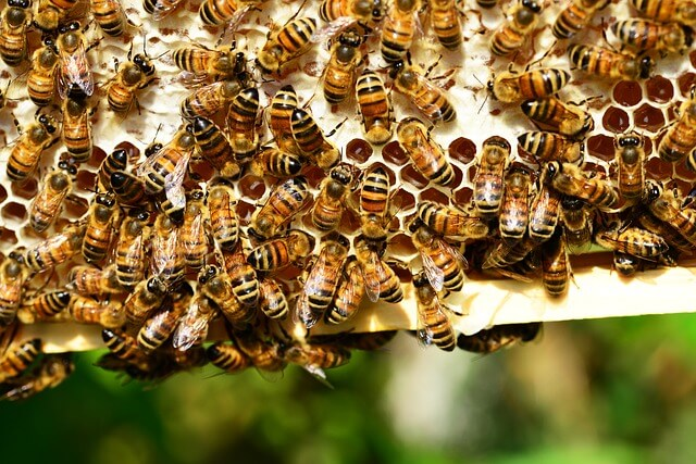 acheter miel manuka